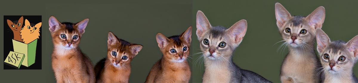 AbSolut Kattklubb